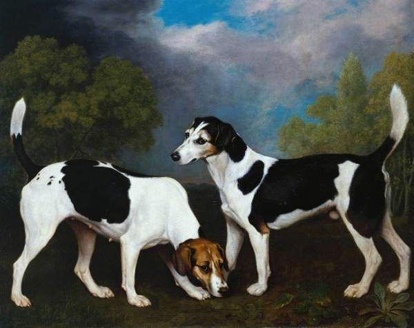 Stubbs, George, 1724-1806; A Couple of Foxhounds